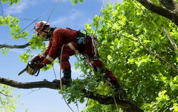 find trusted rated Tulliemet tree surgeons in Perth And Kinross